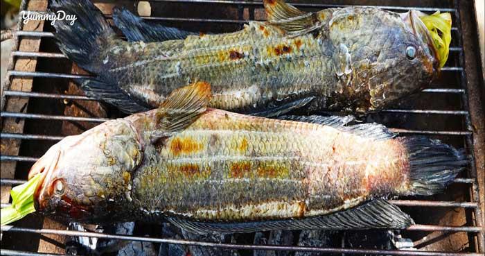Cách làm món cá lóc nướng trui ngon chuẩn vị miền Tây